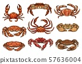 Hermit. hairy and king crans, lobster 57636004