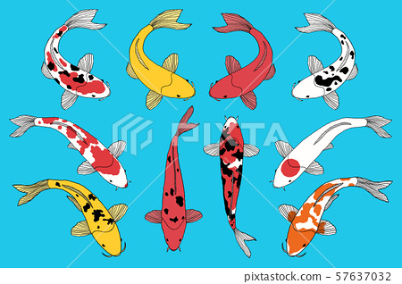 types of koi fishes 57637032