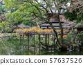 游泳在水的表面上的鸭子,京都Gyoen秋天秋叶京都 57637526