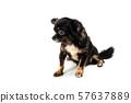 The cute puppy, cute dog 57637889
