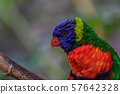 colorful parrot in Loro Park in Tenerife, Spain 57642328
