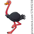 Ostrich animal cartoon isolated on white background 57649238