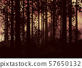 Dark Foggy Forest 57650132