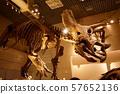 우에노 : 트리케라톱스 57652136