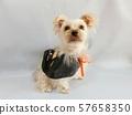 할로윈 가장 한 작은 강아지 2 57658350
