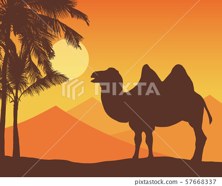 Illustration with realistic silhouette of a camel 57668337