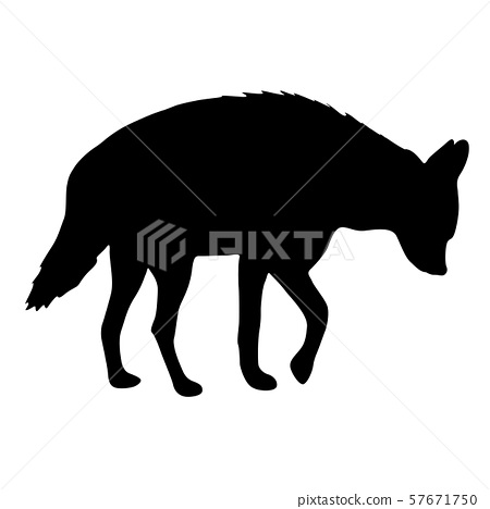 Silhouette of hyena on a white background 57671750