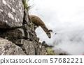 Machu Picchu , Peru, 57682221