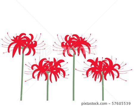 피안 꽃 벡터 자료 57685539