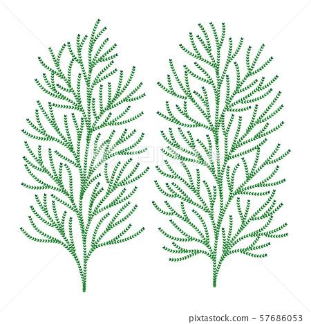 히바 나무 잎 벡터 일러스트 57686053