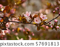 Beautiful nature scene with blooming tree and sun. 57691813