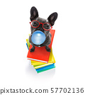 smart dog and books, chewing bubble gum 57702136