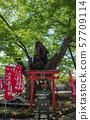 치치 이마 미야 신사 류진 나무 57709114