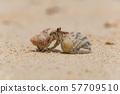 해변에서 노니는 소라게 57709510