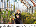 Florists woman working in greenhouse. 57709719