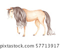 Brown horse on white background. Watercolor illustration. 57713917