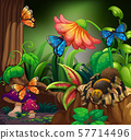 Butterflies and spider in the forest 57714496