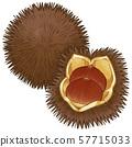 琥珀栗色设置深褐色,画线① 57715033