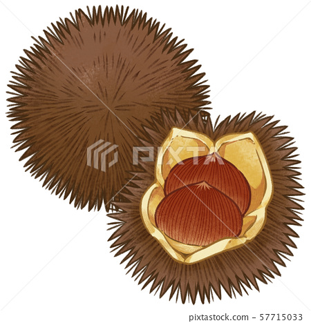A set of dark tea and open chestnuts (with line art) 57715033