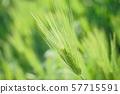 Blue blades of grass. 57715591