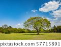 Tatebayashi Azagaoka Park Azalea 57715891