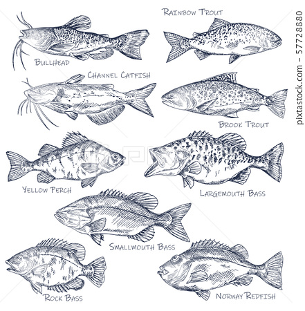 Sketch icons of seafood or water fish. Fishing 57728880