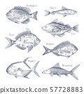 Seafood sketch or set of isolated hand drawn fish 57728883