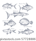 Set of isolated fish sketch for shop or store,menu 57728886