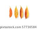 낙엽 57736584