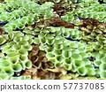 Aquatic plants abstract background 57737085