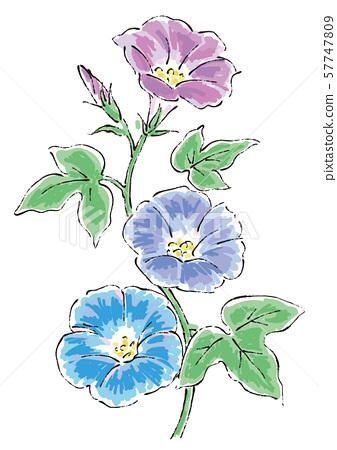 四個季節的花朵牽牛花插畫01 57747809