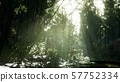 Lush green leaves of bamboo near the shore of a 57752334