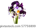 pansy flower isolated 57756899
