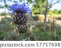 Thistle is the common name of a group of flowering plants characterised by leaves with sharp 57757698