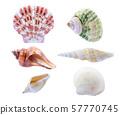 seashell isolated on white background. 57770745