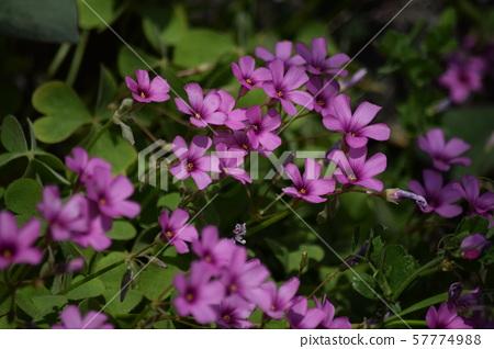 길가에 피어있는 꽃 57774988