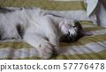 고양이 凛太朗 재미 57776478
