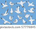Atlantic white seabird fly at sky. Beach seagull at quay. Sea birds, gull cartoon vector 57776845