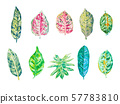 Set of watercolor leaves isolated on white 57783810
