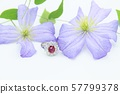 반지 다이아몬드 루비 57799378