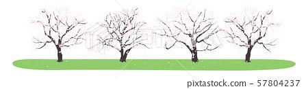 日本春天。櫻桃樹行的例證。 57804237