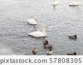 얼음 치는 호수의 백조 2 57808305