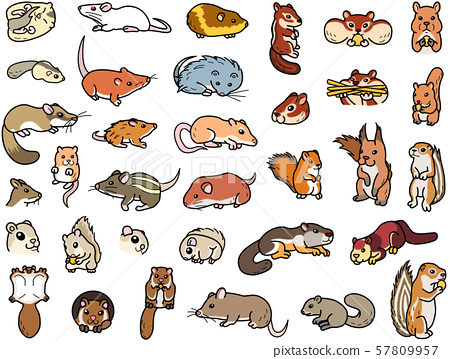 Various rodents: Japanese mice and squirrels 57809957
