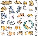 다양한 애완 동물 쥐 설치류 57809958