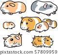 애완 동물 쥐 설치류 기니피그 57809959