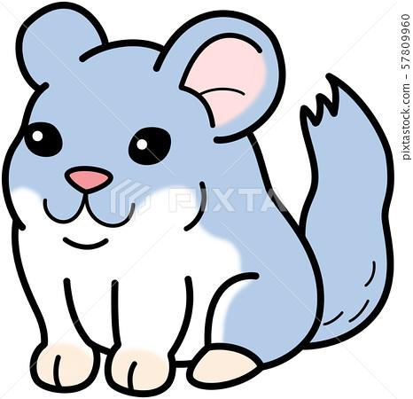 Pet rat rodent chinchilla 57809960
