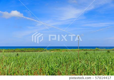 甘蔗田灌溉水 57814417