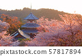 Cherry blossoms of the Yoshino Imperial Palace ruins on Mount Yoshino at dusk 57817894