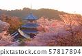 黃昏時吉野山上的吉野故宮的櫻花 57817894