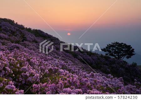 경남 합천 황매산의 철쭉, 봄꽃, 꽃, 일출 57824230